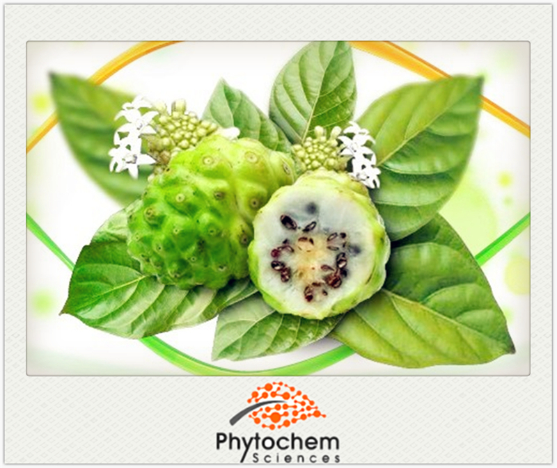 The king of fruit Noni Extract Morinda Citrifolia