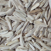 white sunflower seed import sunflower seeds