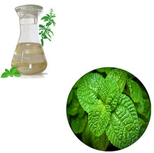 Dielegance GMP Factory Supply Bulk Peppermint Oil Essential