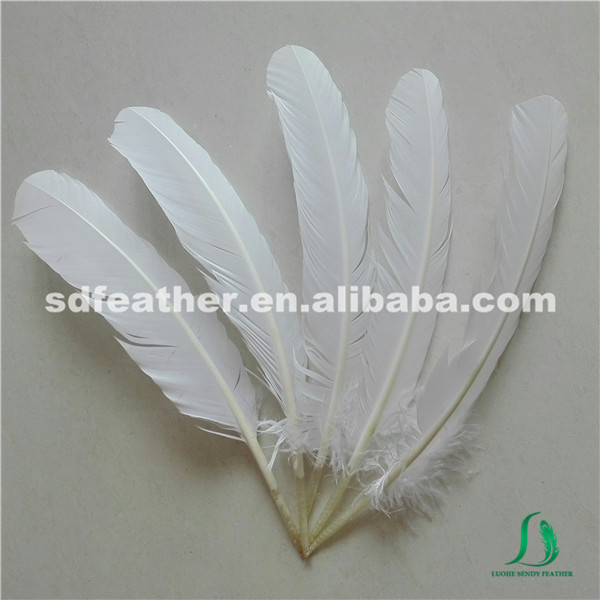 manufacturer dyed white turkey wing feather turkey quills for sale