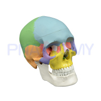 PNT 0153 3 Parts Colored Skull