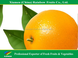 Fresh Navel Orange Mandarin Fresh Orange Chinese Kino Pakistani Kino