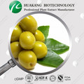 10 years factory provide Olea Europaea L. extract powder
