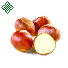 export quality chestnuts fresh raw chestnuts wholesale