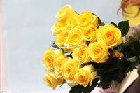 Wide varieties promotional long stem yellow fresh rose