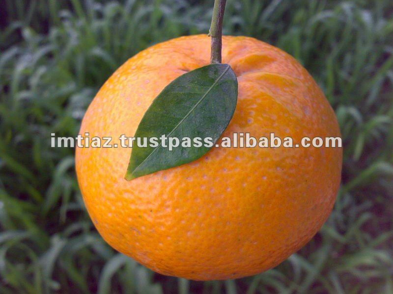 New Year 2017 Special Offer - Mandarin Orange