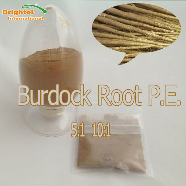 Pure natural Burdock Root Extract with free sample