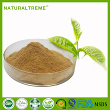 Food Supplement Material Fitness Herbal Tea Extract