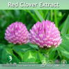 Hot Selling Trifolium pratense Extract Powder,Trifolium pratense P.E.,Red Clover P.E. 10:1