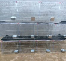 cheap rabbit farming cage,industrial cage for rabbit,commercial rabbit cage in Kenya farm