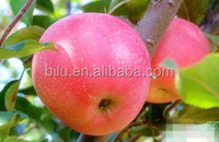 2016 China fruit top red apple wholesale apple fruit