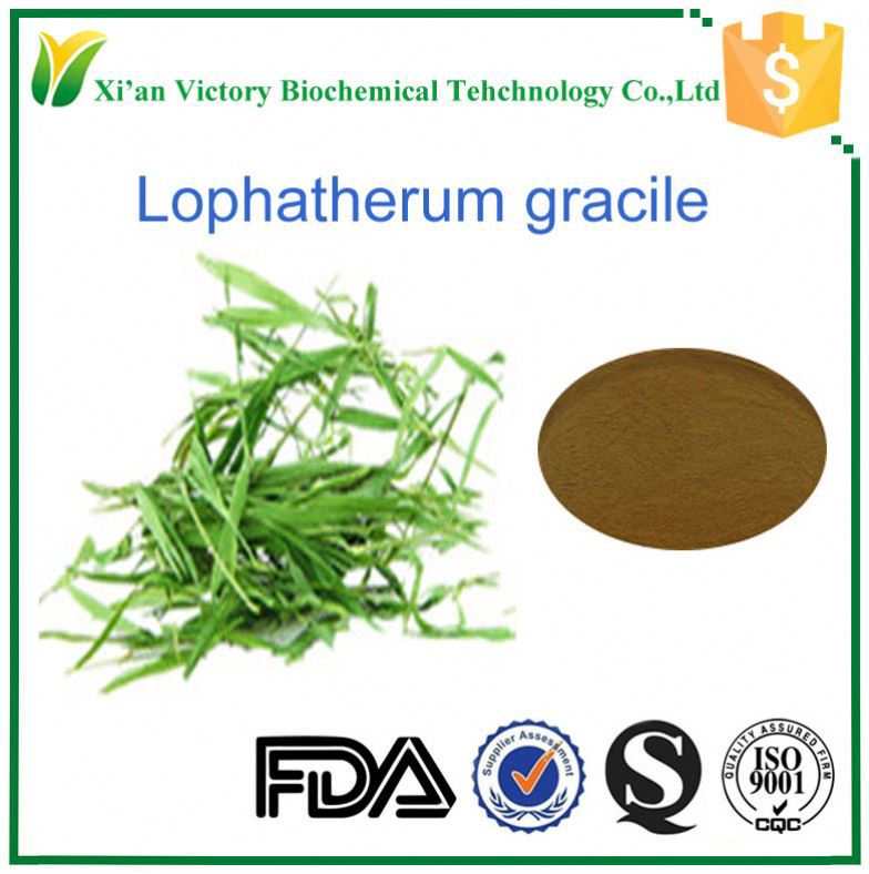 Factory supply Arundoin Antioxidant of Bamboo leaves Pure Lophatherum gracile