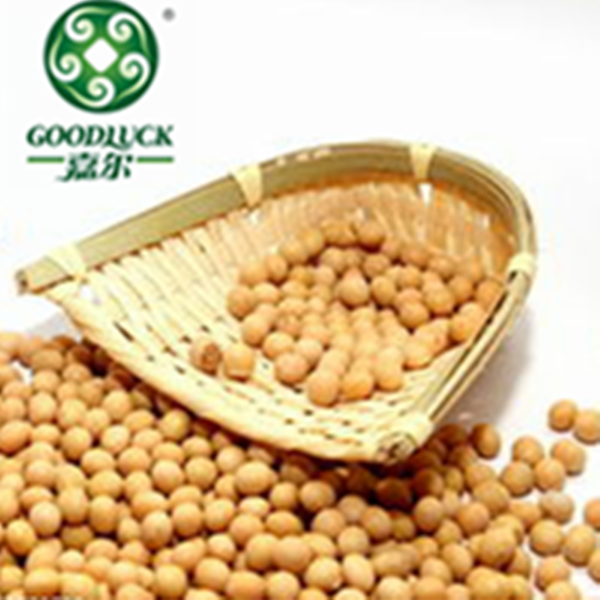 Specifications of Soy Bean for Powder