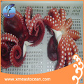 Factory wholesale cheap fresh seafood large octopus