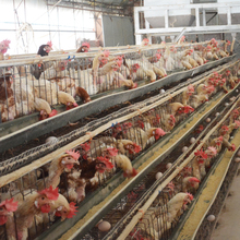 Factory price hot dip galvanized wire cage chicken farming