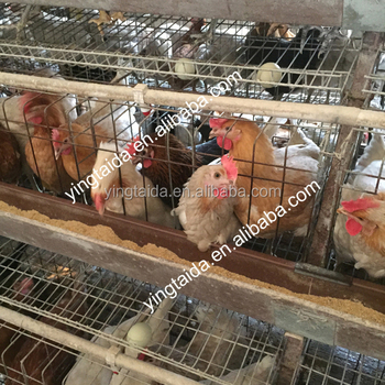 Design Automatic egg laying Chicken cage for Nigeria poultry farm/Battery chicken cage sale(Professional Manufacturer)