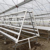 Commercial Greenhouses For Aeroponics Greenhouse Hydroponics