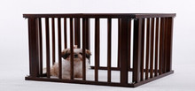 wooden dog kennel with fence