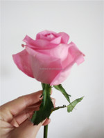 good smelling bulk wholesale/garden roses/ fresh cut flowers