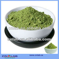 Factory price barley grass juice Powder extract