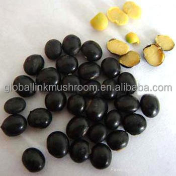 black soya bean with yellow kernel factory supply