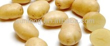 Baby Dutch Yellow farm fresh Potato
