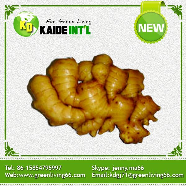 Golbal Gap Approved Top Quality Market Prices For Best Price Ginger