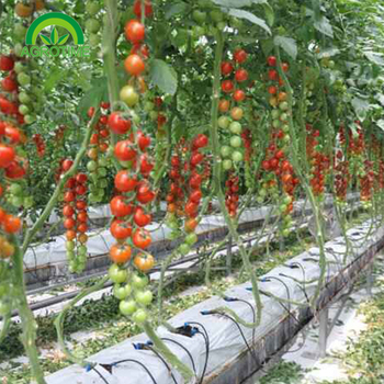 Vertical Farm Hidroponia Pvc Aeroponic Nft,nft hydroponic system cocopeat grow bag