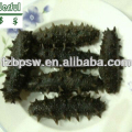 Price of black dried sea cucumber/sea slug/trepang
