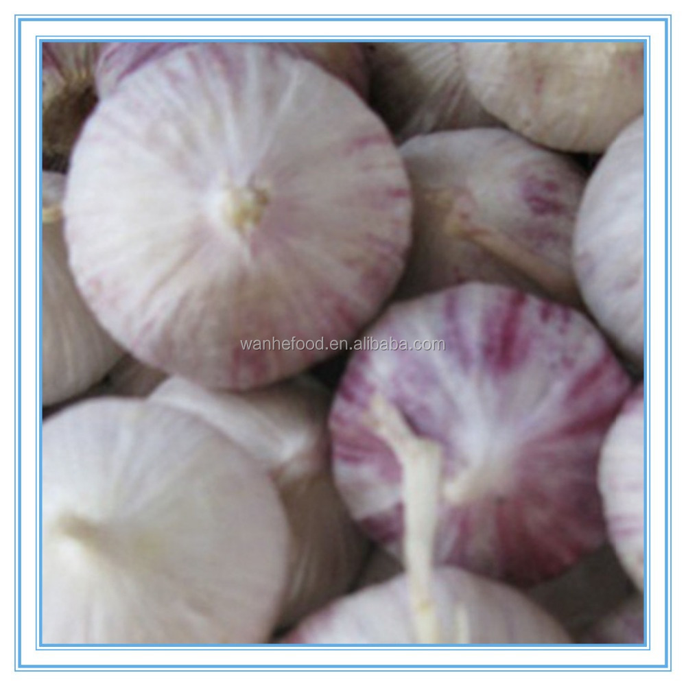 China fresh garlic clove price, Chinese solo garlic