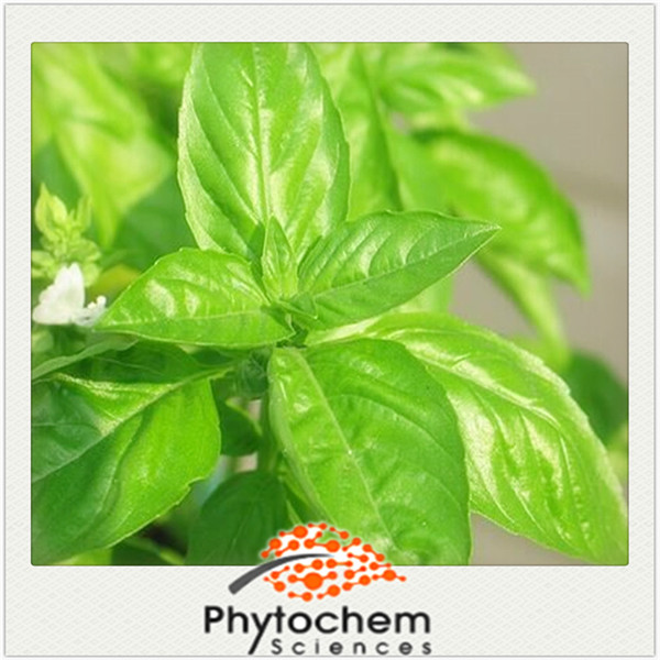 Chinese herbal Holy Basil Extract 25% Ursolic acid