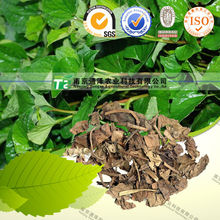 100% pure natural Houttuynia cordata or Heartleaf Houttuynia Herb