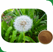 Liver Function Improvement Natural Dandelion Root Extract Powder