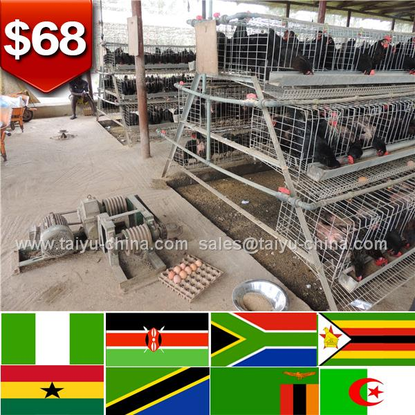 Supply clearance service chicken cages for breeders hens
