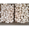 /product-detail/holland-fresh-home-fresh-normal-organic-pure-white-garlic-60737692010.html