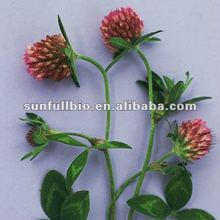 Red Clover Extract 8% Isoflavones for women health