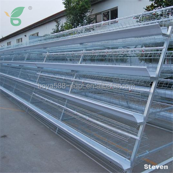 Full automatic egg layer chicken hen battery cages