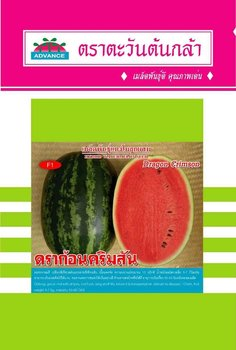 "hat dua hau""Dragon Crimson"" watermelon seed"