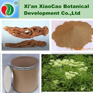 High Quality Natrual Angelica Archangelica Extract,Angelica Archangelica Root Extract,Dong Quai Extract