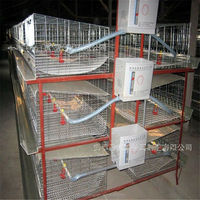 XSC-2 H line chicken cages for farm