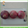/product-detail/fresh-chinese-onion-in-the-lowest-price-for-export-60357465554.html
