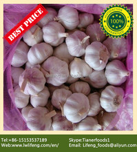 Most favourable Price of Chinese Purple Garlic / Red Garlic / Pink Garlic