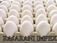 Farm Fresh poultry Indian white shell chicken table eggs