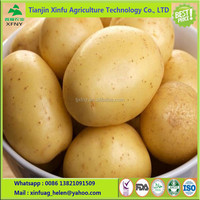 2017 New Crop Fresh Potato