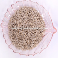 bakery sunflower seeds kernels hot sale for competitive price