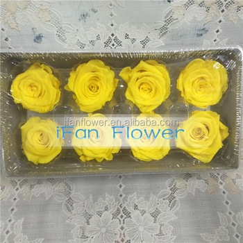 High quality stabilized preserved fresh rose large flower head