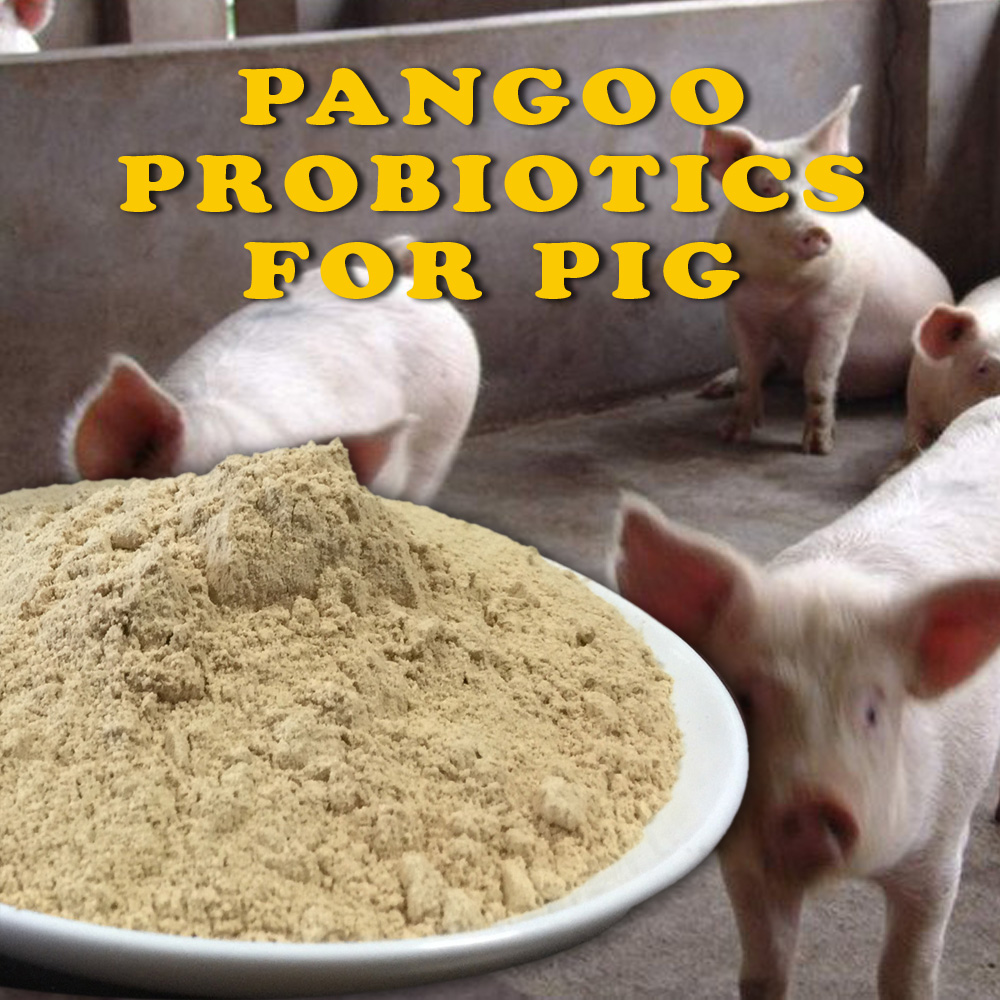 Piglet(Piglets) probiotic enzymes nutrition facts
