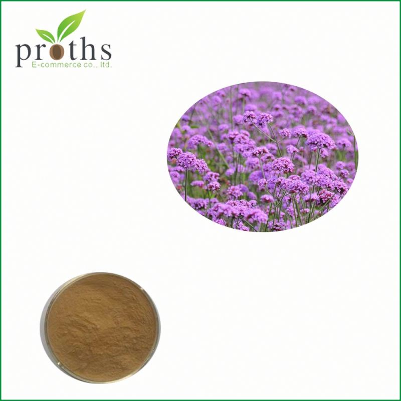 Chinese Herbs low price blue vervain verbena extract powder