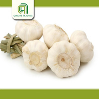 Hot selling 2013 whole sale garlic/cheap price with great price