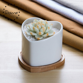 Custom shape white Succulent Plant in Ceramic Pot with Bamboo Tray